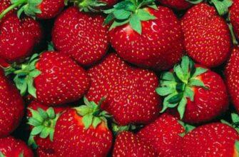 5 продуктов, которые нужно есть перед секsом, чтобы сделать вашу ночь еще лучше